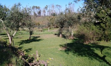 Plot Land for Sale in Pampilhal, Castelo Branco