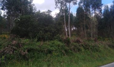 Plot Land for Sale in Vale Pêro Corvo Sertã, Castelo Branco