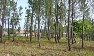 Plot Land for Sale in Trizio Palhais, Castelo Branco