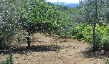 Plot Land for Sale in Porto Carro, Cernache do Bonjardim, Castelo Branco